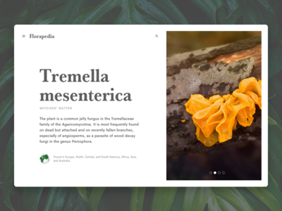 Florapedia – Witches' Butter web ui yellow flower wikipedia typography plants plant flowers flower flora