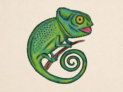 Chameleon drawing pointtopoint wild lizard illustration reptile animal chameleon