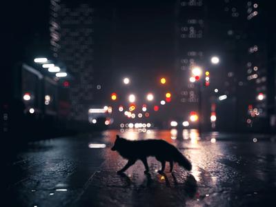 Townee fox