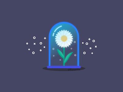 Daisy flower daisy