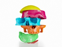 Colorful Human Skull