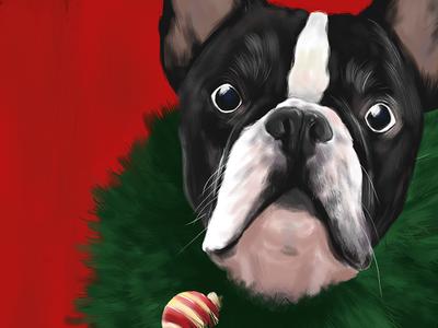 Beatriz, the Christmas Bulldog digital frenchie french christmas red illustration bulldog
