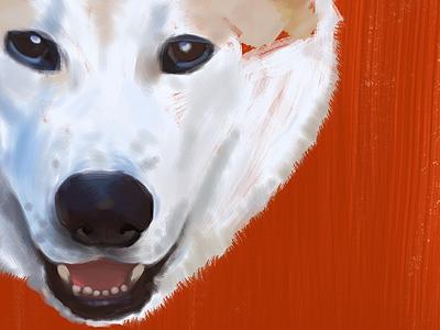 Coronel orange photoshop brush digital akita dog illustration