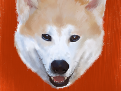 Coronel Final orange photoshop brush digital akita dog illustration
