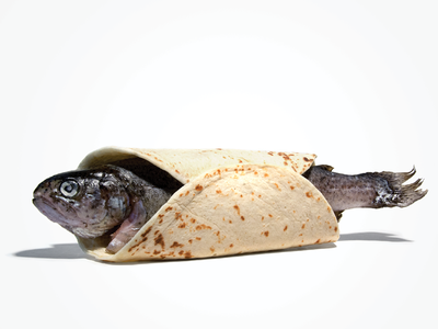 Fish Taco student print taco fish advertising smelly conceptual photography