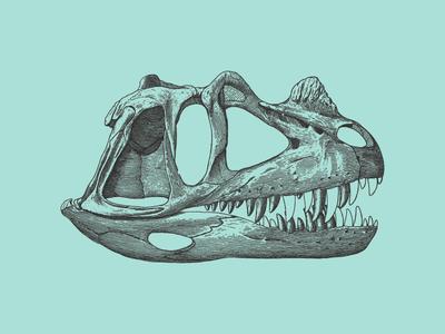 Dino-skull dinosaur bones skull anatomical