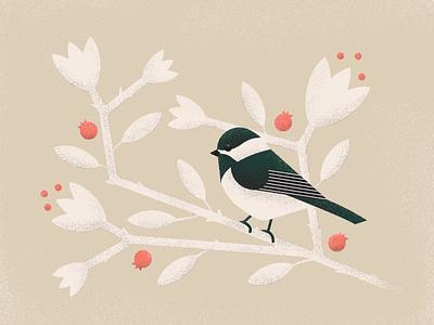 Illustration — Black-capped Chickadee birb wildlife conservation bird illustration conservation wildlife illustrator birds bird chickadee illustration vector design