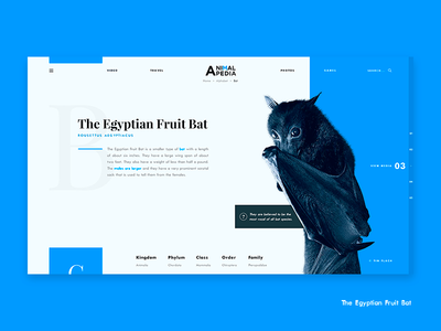 """""""B"""" is for Egyptian Fruit Bat national geographic discovery egyptian bats bat encyclopedia nature animal animals"""