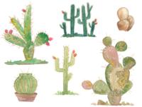Watercolor cactus garden
