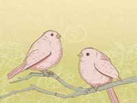 Birds big
