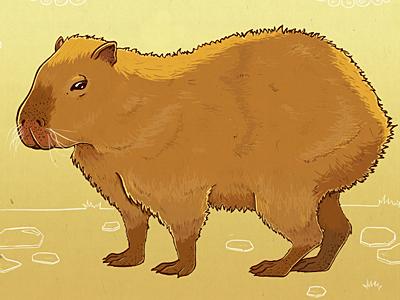 Capybara sm
