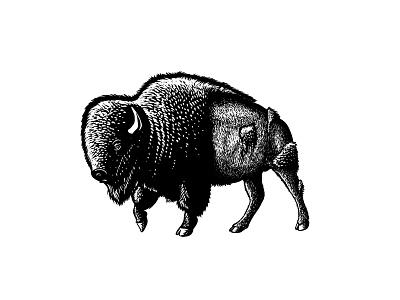 Buffalo procreate digital illustration