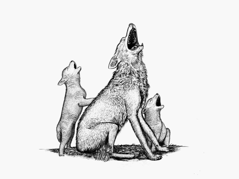 Family of Wolves inking pup wolves wolf etching illustration
