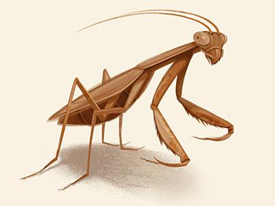 Mantis Illustration  insect mantis illustration character design bug