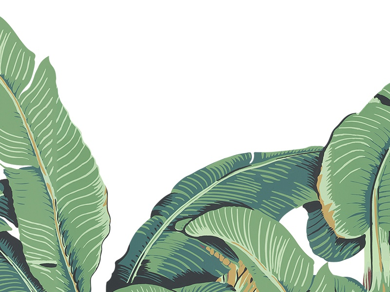 up coming banana leaves snapchat filter by hungry dribbble