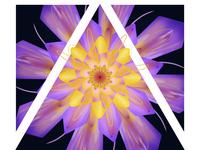 Kaleidoscope Night Lily Drawing