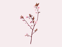 Spring 🌸