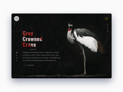 Grey Crowned Crane animal carousel slider design web ui ux