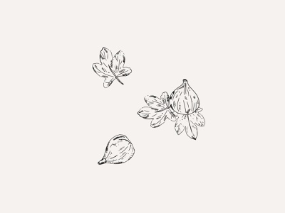The Savory Fig - Illustration pastry bakery vegan drawing illustration