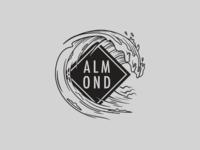 Almond illustration