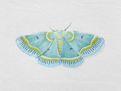 Aqua Moth