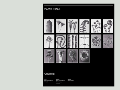 Art Forms in Plants gallery interaction readymag editorial photography art black black white