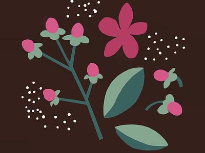 St. John's Wort pink and green flat flower illustration flower illustration nature illustration st. johns wort