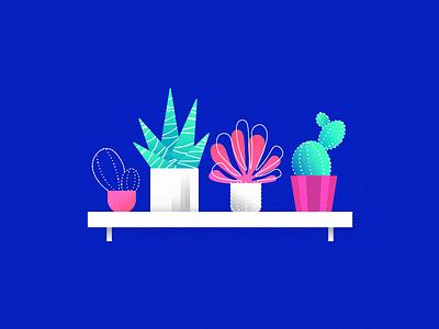 Plants grain linear shelves illustration shelf plants succulent cactus