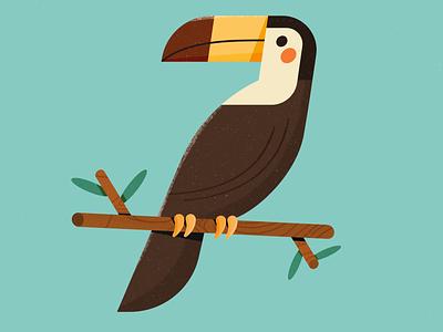 Toucan bird illustration forest birds bird character design affinity designer illustration vector design