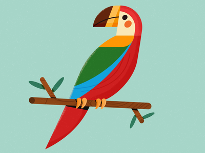 Parrot geometric parrot birds bird character animation character design affinity designer illustration vector design