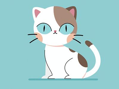 Cat illustration cute cat kitten cats cat motion design character animation animation character design affinity designer illustration vector design