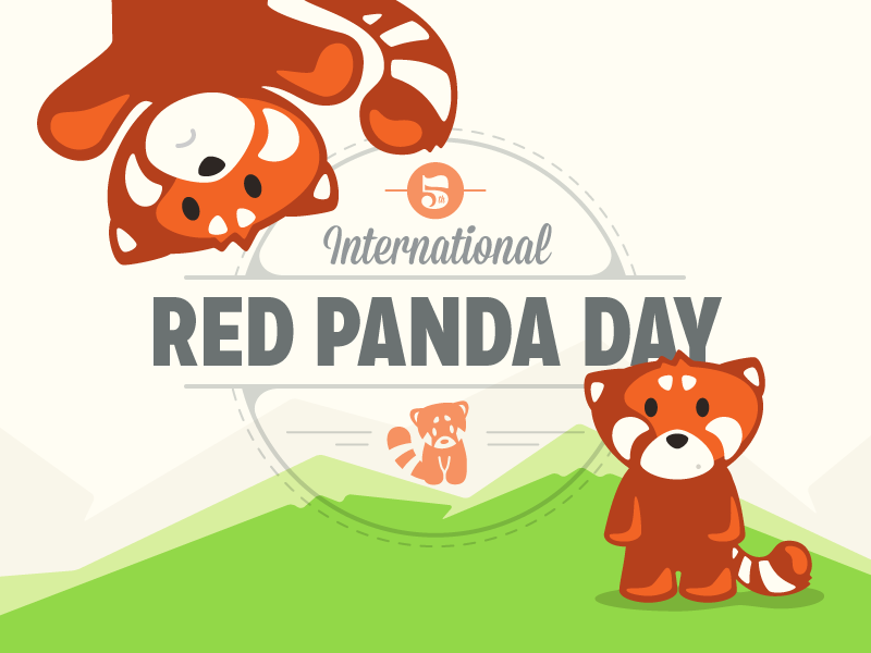 Happy Red Panda Day by Tyler Somers - Dribbble