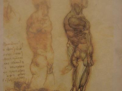 DaVinci Anatomy Study