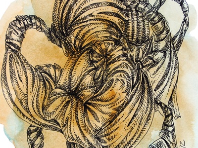 Knotty illustration watercolor pen abstract