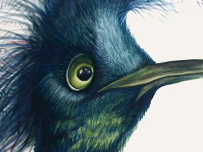 Mystery bird illustration watercolor