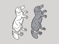 MORE unused Platypuses