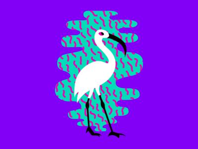 Birds of Summer - Ibis