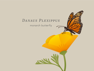 Monarch Butterfly flower poppy insect bug illustration butterfly monarch
