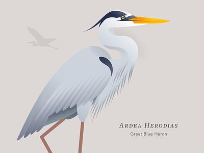 Great Blue Heron feathers bay vector illustration bird