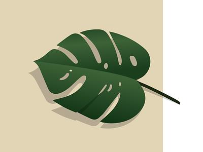Split Leaf philodendron plant vector leaf