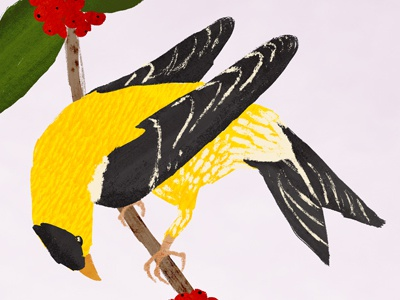 Gold Finch digital illustration texture illustration