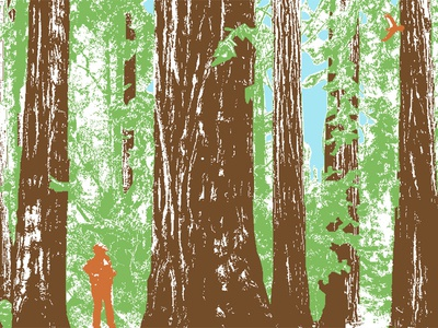 Redwoods illustration color nature california redwoods trees