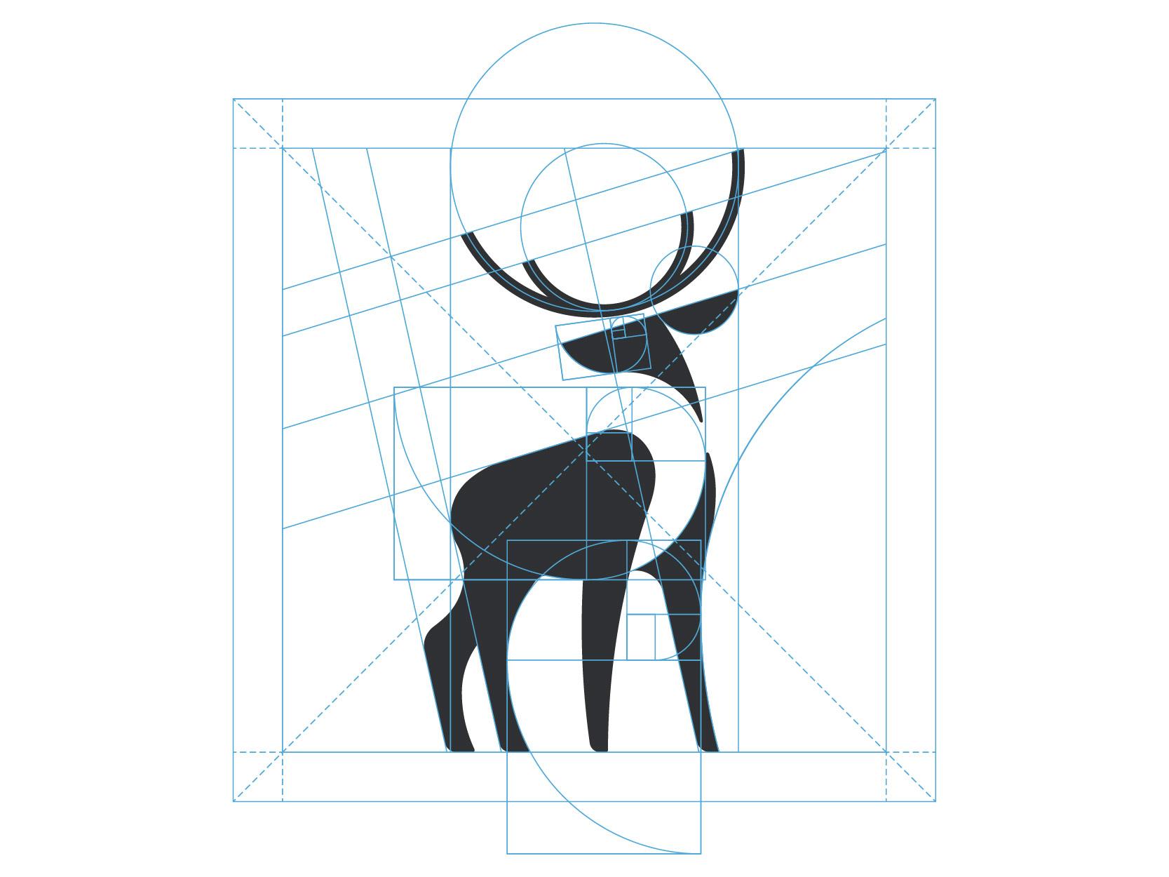 13 deer