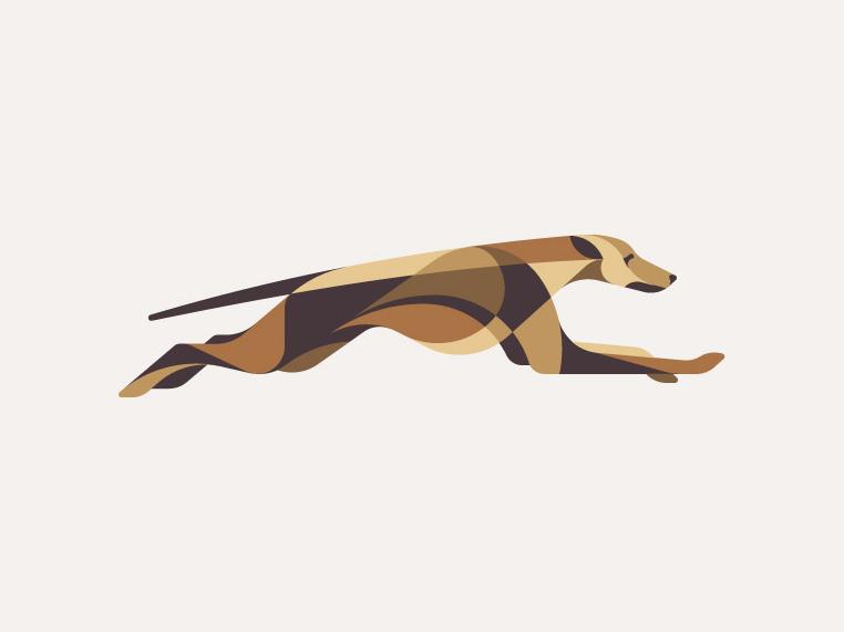 65 greyhound