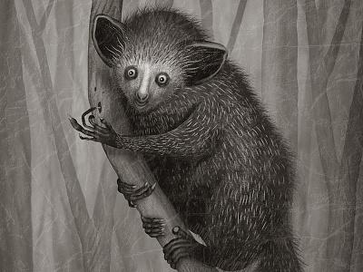 Aye-Aye book illustration animal species animals illustration ayeaye