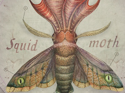 Moth squid  2
