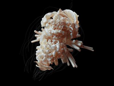 Organic creature nature organic instalation cinema4d render 3d