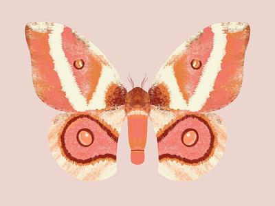 Moth procreate butterfly logo bug antenna wings butterfly moth
