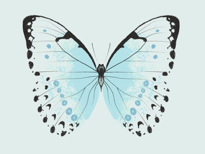Mint Morpho Butterfly antenna bug illustration procreate insect butterfly