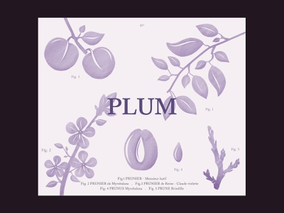 Wine label for Two EE's Winery illustration plant leaves fruit plum label wine purple water color design